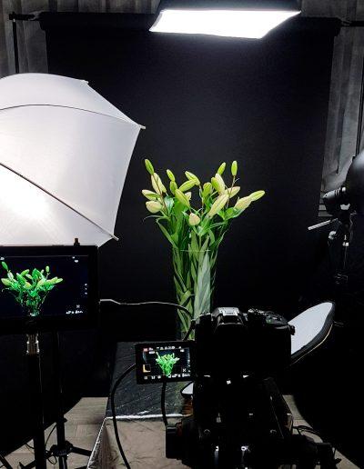 lelie bloem timelapse westlandfilm product video film