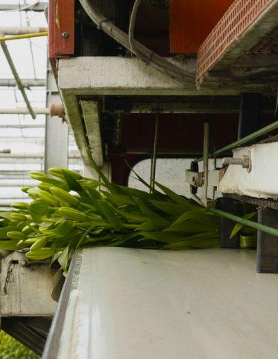 product film westland tuinbouw